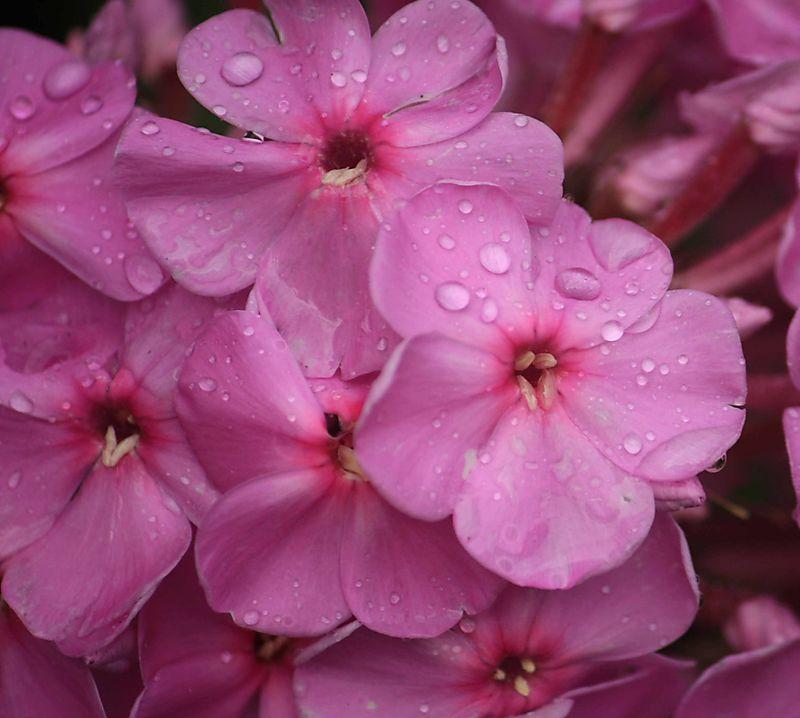 Blog pink