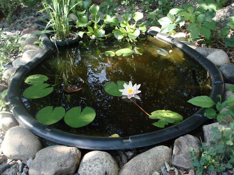 Pond resized