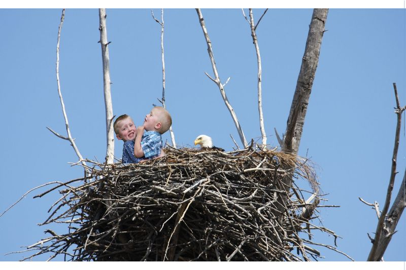 John and Noah eagles nest