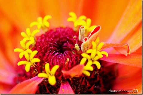 8 Amazing colorg