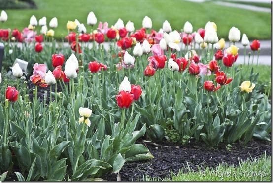 Spring KS